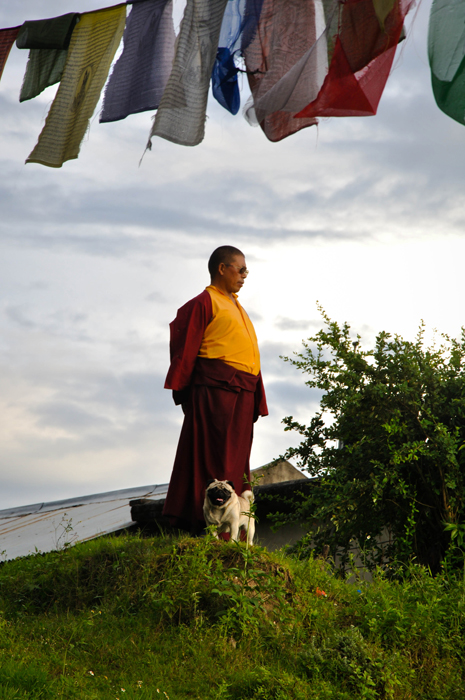 the monk and his dog kai